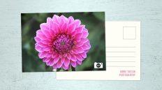 printed postcard